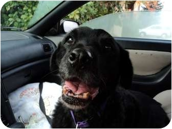 Labrador Retriever Mix Dog for adoption in Fresno, California - Wheeler