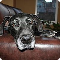 Adopt A Pet :: Feliz - Broomfield, CO