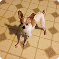 Adopt A Pet :: Jordy - Poulsob, WA