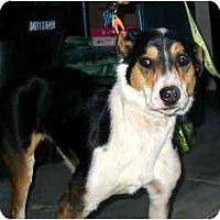 Adopt A Pet :: Trinity - Scottsdale, AZ
