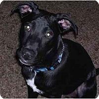 Adopt A Pet :: Boomer - Albany, NY