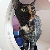 Adopt A Pet :: Sabrina - Madison, AL