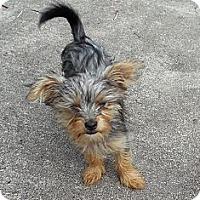 Adopt A Pet :: Maddy - Ormond Beach, FL