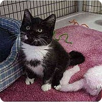 Adopt A Pet :: Tonico - Deerfield Beach, FL