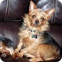 Adopt A Pet :: Karle - Visa, CA