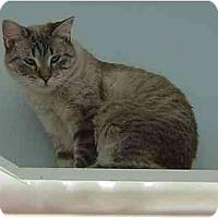 Adopt A Pet :: Victoria - Modesto, CA