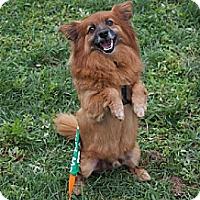 Adopt A Pet :: Redd - Hewitt, NJ