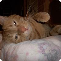 Adopt A Pet :: Calvin - Cocoa, FL