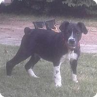 Adopt A Pet :: HOUSTON - Hartford, CT