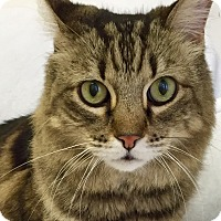 Adopt A Pet :: Margo - Mission Viejo, CA