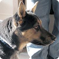 Adopt A Pet :: Katelyn - Germantown, MD