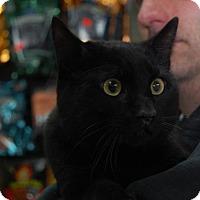 Adopt A Pet :: Aslan - Brooklyn, NY