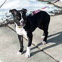 Adopt A Pet :: Raven - Bristol, CT