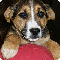 Adopt A Pet :: Peppermint - look at that face - Stamford, CT