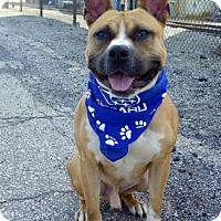 Adopt A Pet :: Huckleberry - Cleveland, OH