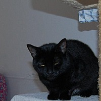 Adopt A Pet :: Sara - Brainardsville, NY