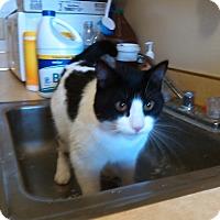Adopt A Pet :: Sheldon - Muskegon, MI
