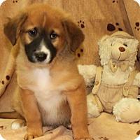 Adopt A Pet :: Prince - Salem, NH