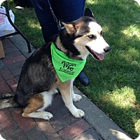 Adopt A Pet :: Leloo - Alpharetta, GA