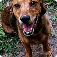 Adopt A Pet :: Petra - Andalusia, PA
