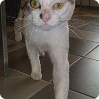 Adopt A Pet :: Streak - Hamburg, NY