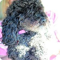 Adopt A Pet :: Lillie - Morganville, NJ