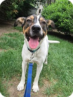Hound (Unknown Type) Mix Dog for adoption in Providence, Rhode Island - Alfie in RI COME MEET ME!
