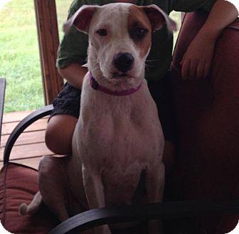 Hound (Unknown Type) Mix Dog for adoption in Salem, Massachusetts - Sophia