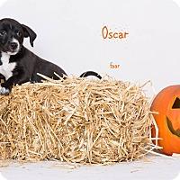 Adopt A Pet :: Oscar - Riverside, CA