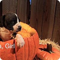 Adopt A Pet :: Luna - Sonoma, CA