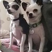 Adopt A Pet :: Bessie - Wyanet, IL