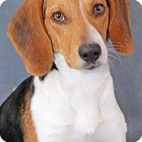 Adopt A Pet :: Thay - Encinitas, CA