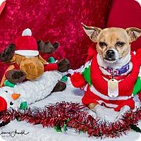 Adopt A Pet :: Honey - San Marcos, CA