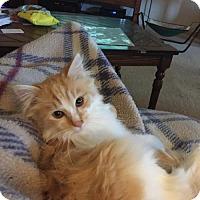 Adopt A Pet :: Teddy - Cincinnati, OH