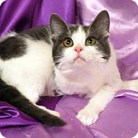 Adopt A Pet :: Carbukkety - St. Louis, MO