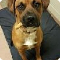 Adopt A Pet :: Charlie 1836 - Columbus, GA