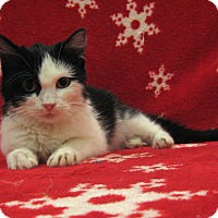 Adopt A Pet :: Kenya - Redwood Falls, MN