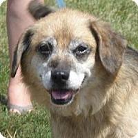 Adopt A Pet :: Dudley - Huntingburg, IN