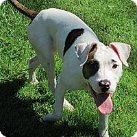 Adopt A Pet :: Blossom - Vernon Hills, IL