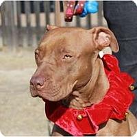 Adopt A Pet :: Della - Rowlett, TX