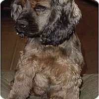 Adopt A Pet :: Santana - Sugarland, TX