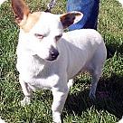 Adopt A Pet :: Parson