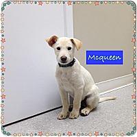 Adopt A Pet :: Mcqueen - Saskatoon, SK