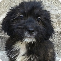 Adopt A Pet :: Jay*ADOPTED!* - Chicago, IL