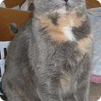 Adopt A Pet :: Kenosha - Jamaica Plain, MA