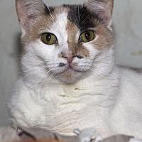 Adopt A Pet :: Chardonnay - Lombard, IL