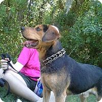 Adopt A Pet :: Capt Jack - Edisto Island, SC