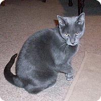 Adopt A Pet :: Makena - Gilbert, AZ