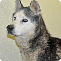 Adopt A Pet :: Taz - Port Washington, NY