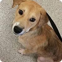 Adopt A Pet :: Tucker - Gainesville, FL